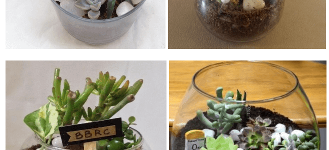 Natural Plants as Corporate Gifts