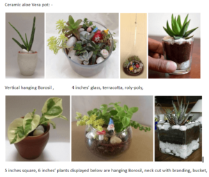 Ceramic Pots With Natural Plants